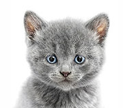 Mutuelle animaux : assurances animaux chat remboursé et heureux