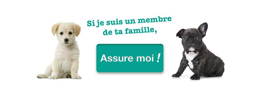 Comprendre son chien : Comment faut-il parler à son chien ? Attitude, tonalité