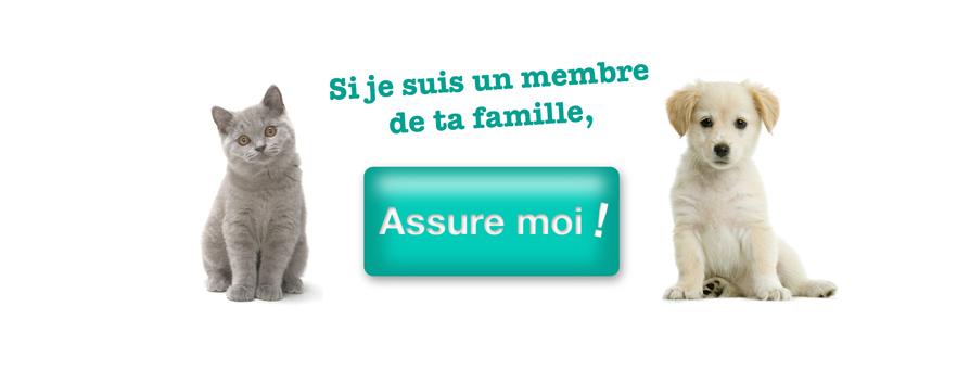 Box animaux : Offre box chien et chat