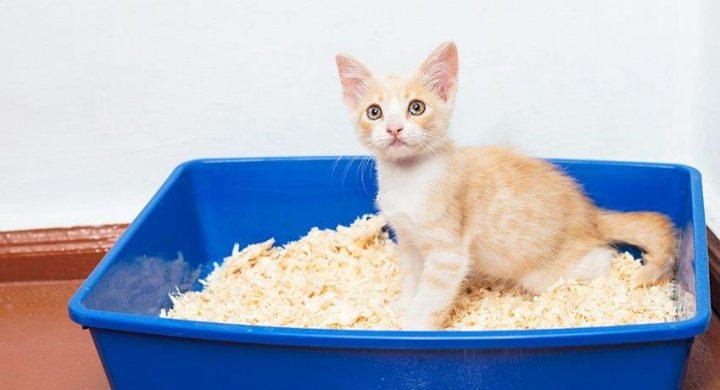 Nettoyer litière chat : Entretien
