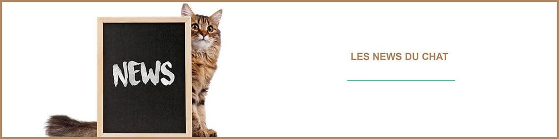 News chats : toutes les actus des chats