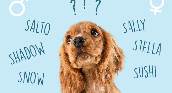 Quel nom de chien choisir en 2021 ?