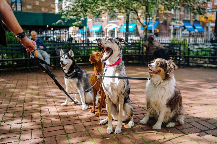 Dog buddy, trouver votre nounou pour chien