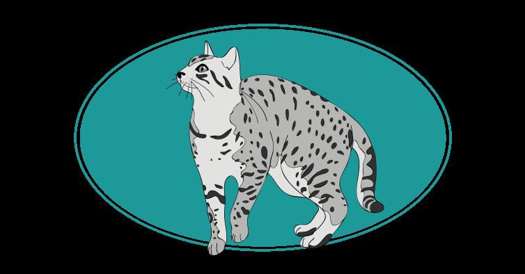 Ocicat chat animal races : tout savoir sur les chats