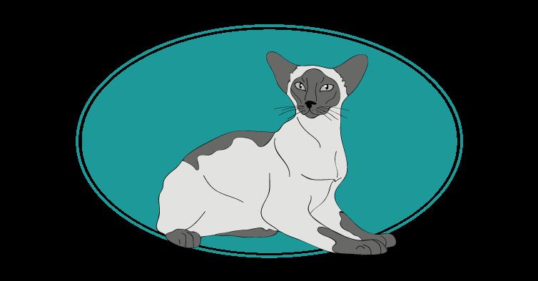 Chat oriental animal races : tout savoir sur les chats