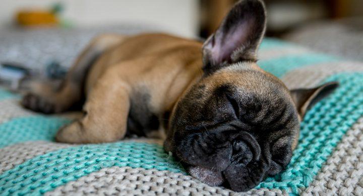 Ou faire dormir son chien, dans sa niche, dehors, sur un coussin
