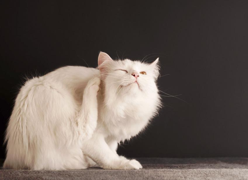 Le parasite du chat : Entretien