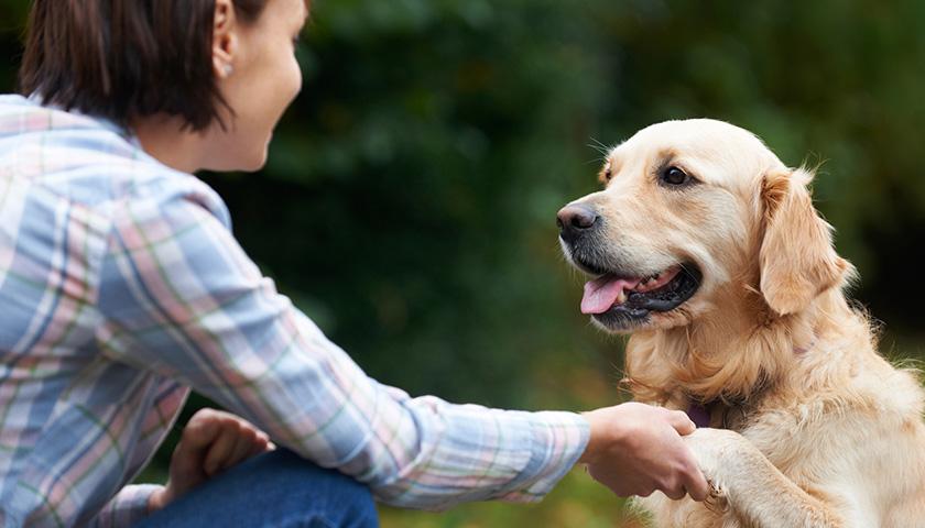 Parler à son chien : comment converser avec son chien