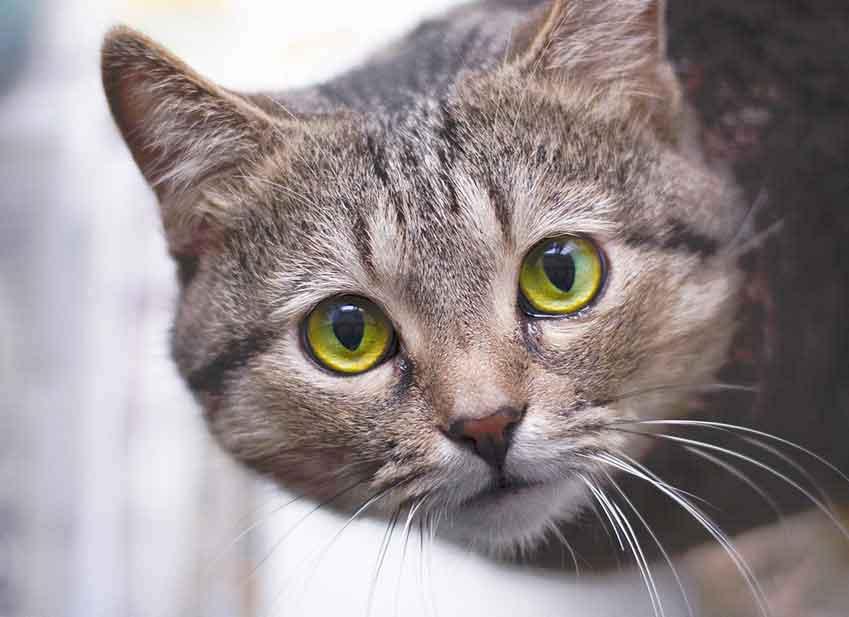 Education chat : partir en vacances avec son chat