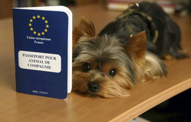 Passeport pour chien : voyager en toute sérénité avec son chien