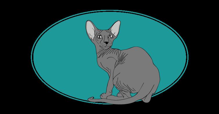 Peterbald chat animal races : tout savoir sur les chats