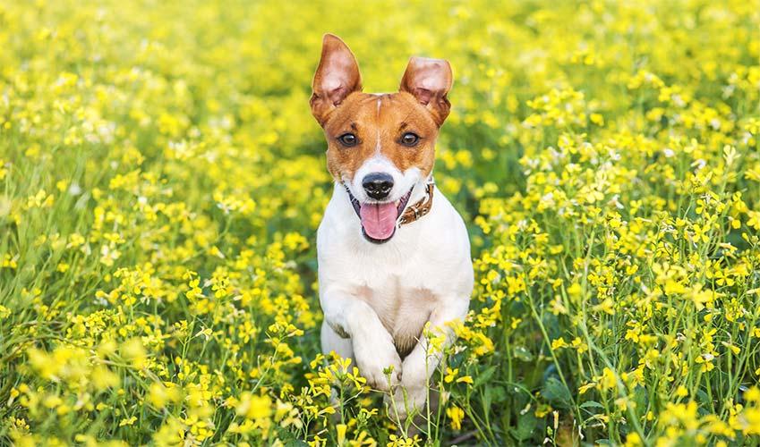 Piqûre guêpe chien : comment agir ?