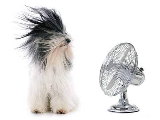 Cooling Off With Fan : Entretien chien comment toiletter son par étape