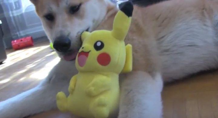 Pokémon Go : Promener son chien en jouant au jeu est-ce une bonne idée ?