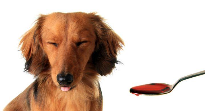 Prise en charge des frais vétérinaire : urgence vétérinaire
