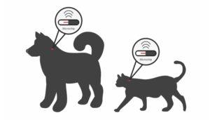 ICAD Identification: Prix pour pucer un chat, Puce electronique chien