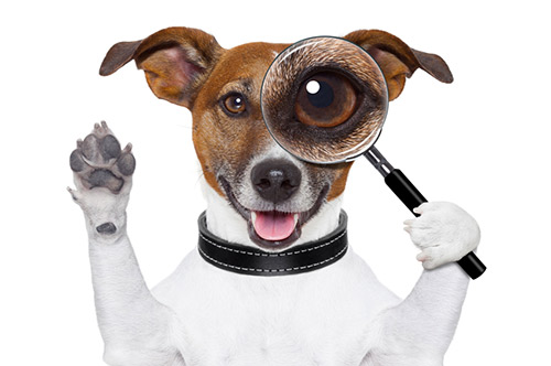 Les produits Alimentaires toxiques pour le chien