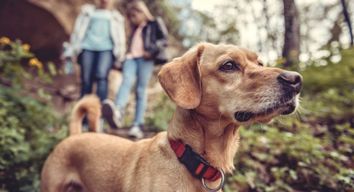 Promener son chien sans laisse : Comment et pourquoi