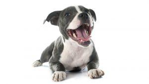 Comment bien eduquer son chien, dressage chien, apprendre à son chien