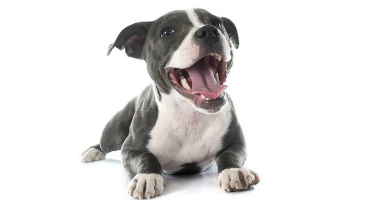 Psychologie du chien : Comprendre son chien et les émotions du chiens