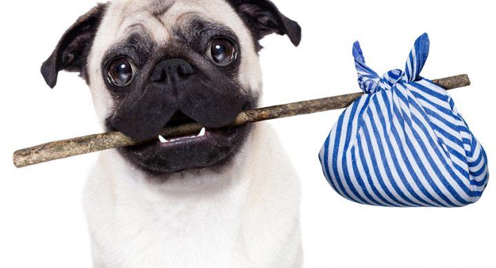 Chien perdu : que faire quand on perd son chien : Accident