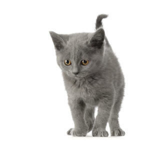 Esperance de vie chat en irc