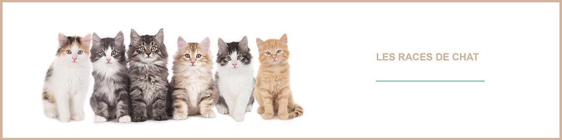 Races de chats : tout savoir sur les chats