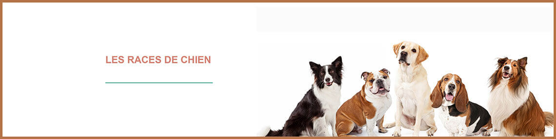 Toutes les races de chien : races de chiens