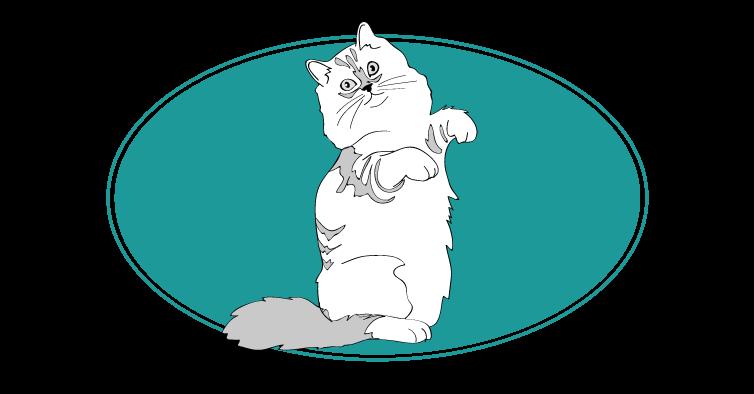 Ragamuffin chat animal races : tout savoir sur les chats