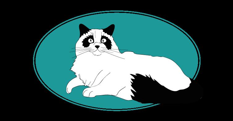 Ragdoll chat animal races : tout savoir sur les chats