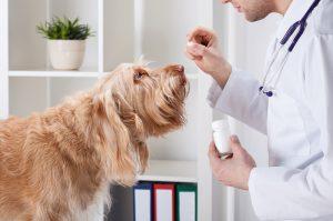 Medicament humain pour chien : Se faire prescrire des médicaments par son vétérinaire