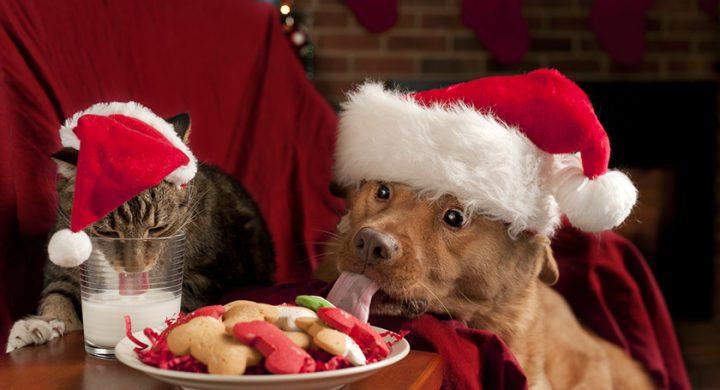 Repas de Noel pour chien ou chat, alimentation chien, aliment chat