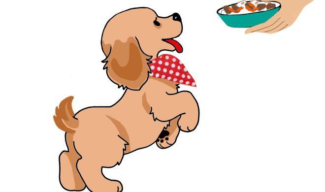 Riz bœuf et carottes : astuces recette blog chien