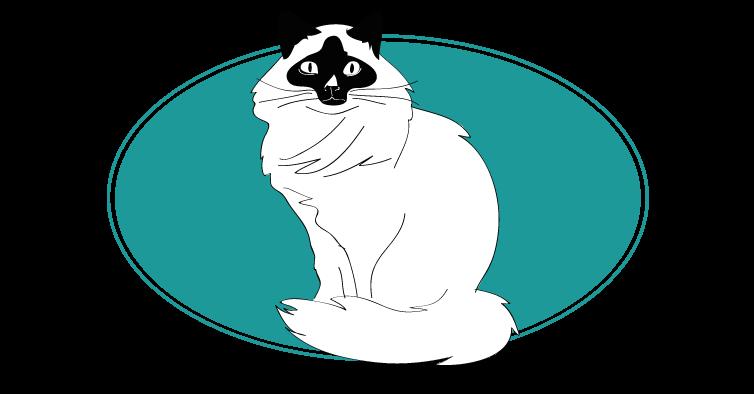 Sacré de Birmanie chat animal races : tout savoir sur les chats