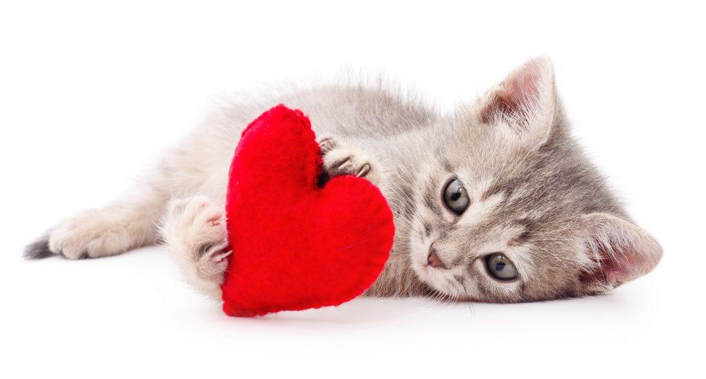 Saint Valentin : Offrir un cadeau pour chat