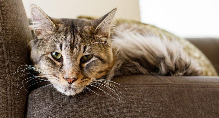 Santé du chat : Comment prendre soin d'un chat senior, chat âgé, chat vieux