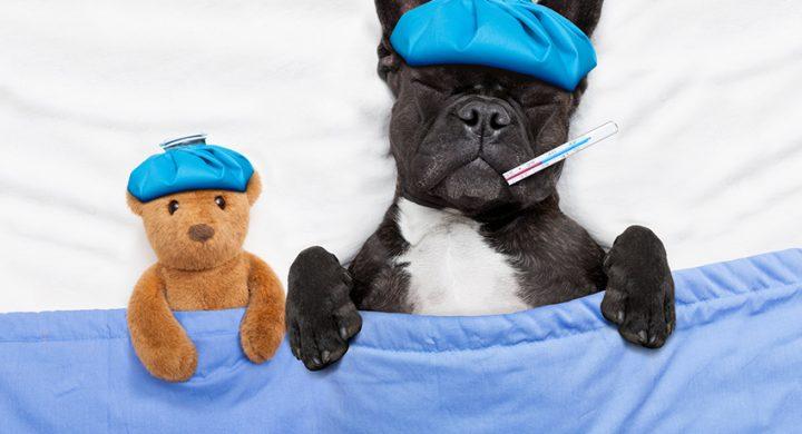 La santé de votre chien les signes pour savoir s'il est malade : santé