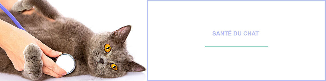 Santé Prévention chat : prendre soin de son chat