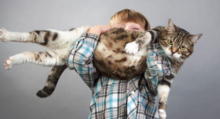 Santé Prevention chat : Comment faire maigrir un chat gros