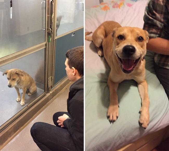 Sauvetage chiens : 15 photos d'animaux avant et après leurs sauvetages