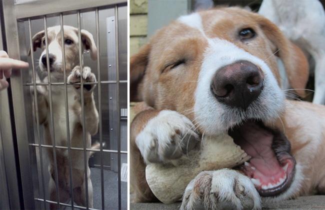 Sauvetage chiens : un chien heureux après son sauvetage