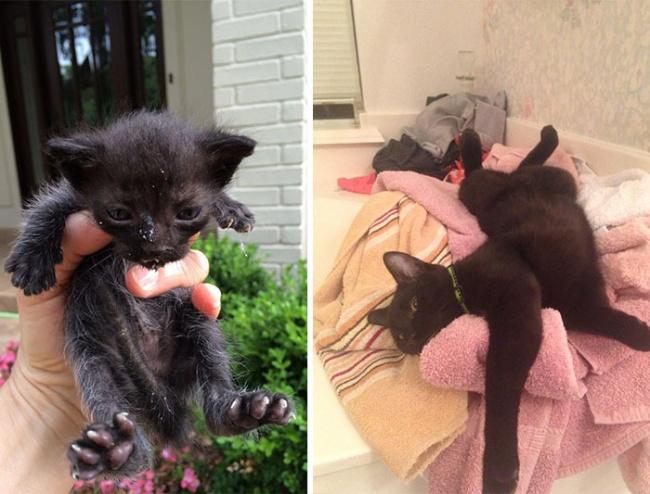 Sauvetage chiens et chats : photo d'un chat noir heureux après son sauvetage