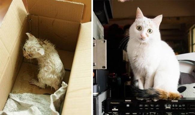 Sauvetage chiens et chat : la photo d'un chat avant et après son sauvetage
