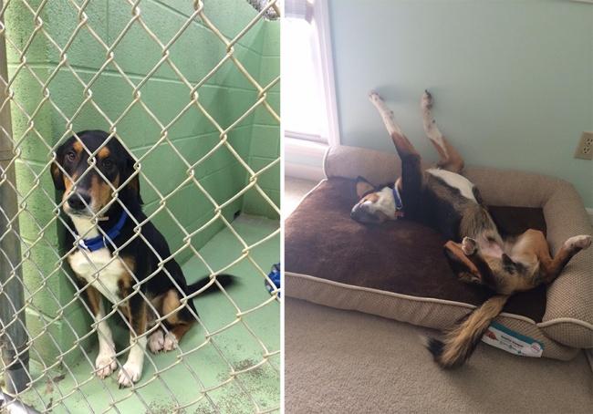 Sauvetage chiens : la photo d'un adorable toutou avant et après sauvetage