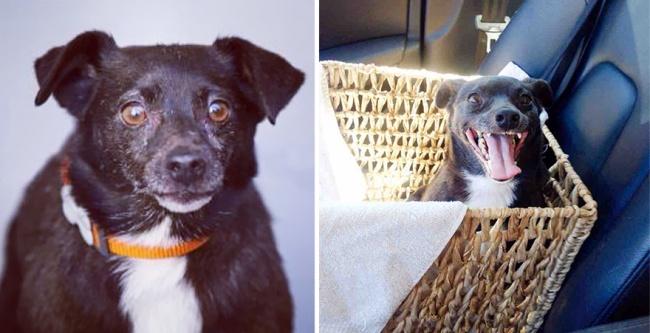 Sauvetage chiens : un chien heureux de trouver une nouvelle famille après son sauvetage