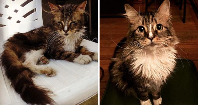 Sauvetage chiens et chats : sauvetage animaux, la photo émouvante d'un chat après son sauvetage
