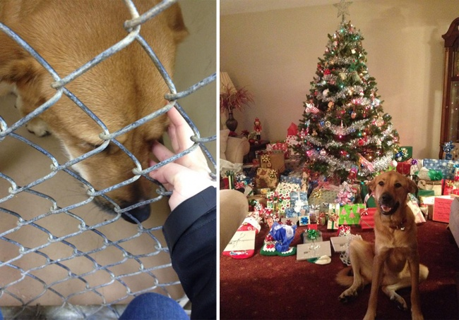 Sauvetage chiens : la photo d'un chien heureux à Noel après son sauvetage