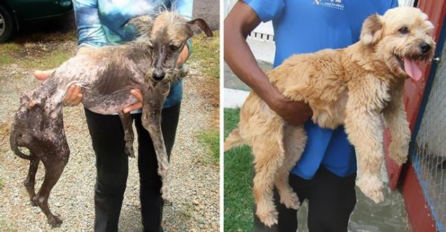 Sauvetage chiens : la photo émouvante d'un chien heureux après son sauvetage