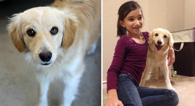 Sauvetage chiens : une photo d'un chien heureux avec sa famille après son sauvetage