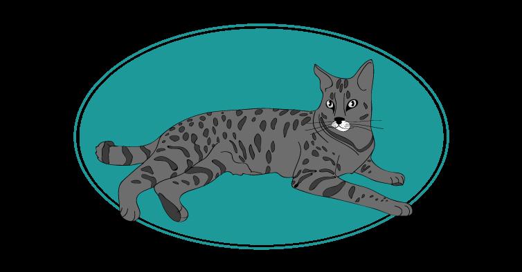 Savannah chat animal races : tout savoir sur les chats